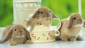 rabbit-06
